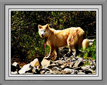 Daisy The Pet Dog  Photo, Rictographs Images
