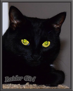 Raider Girl, Cat