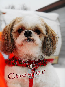 Chester The Pet Dog
