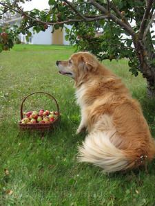Keiara, The pet Dog