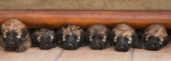 ALL BUT ONE     KEIGHLEY'S 2015 LITTER-1