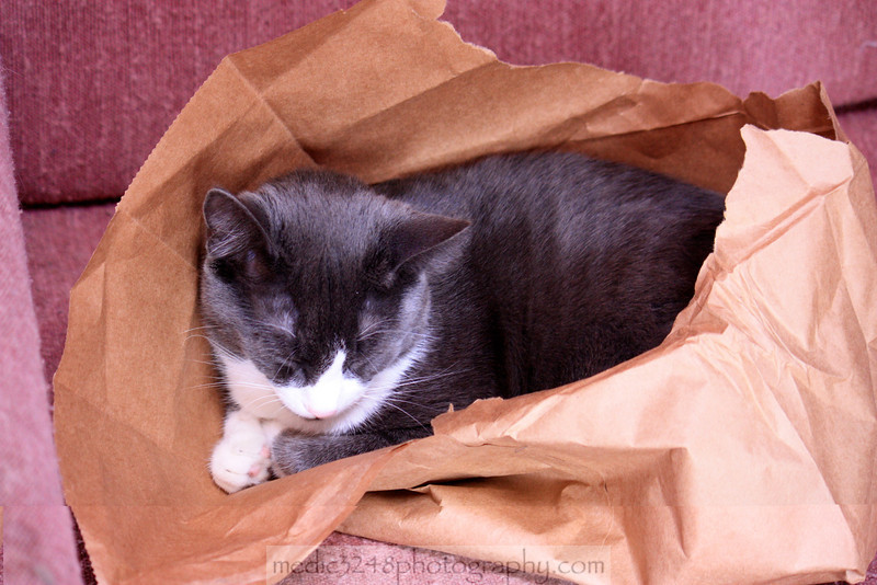 Rigby in a bag