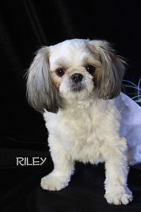 Riley 062 name