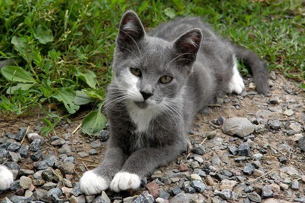 Rippey Kitties