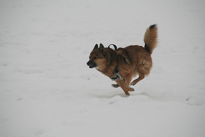 2008-Pets