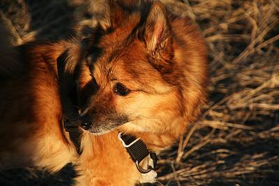 2011-Pets