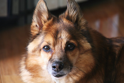 2011-03-Pets
