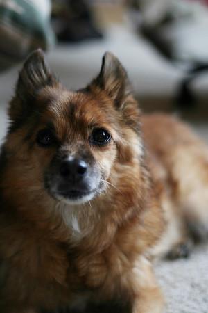 2011-07-Pets