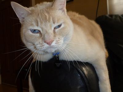 2011-09-Pets
