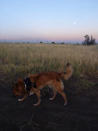 2011-10-Pets