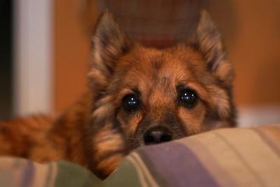 2011-12-Pets