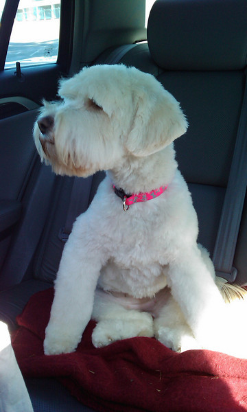 After her first visit to the beauty parlor.