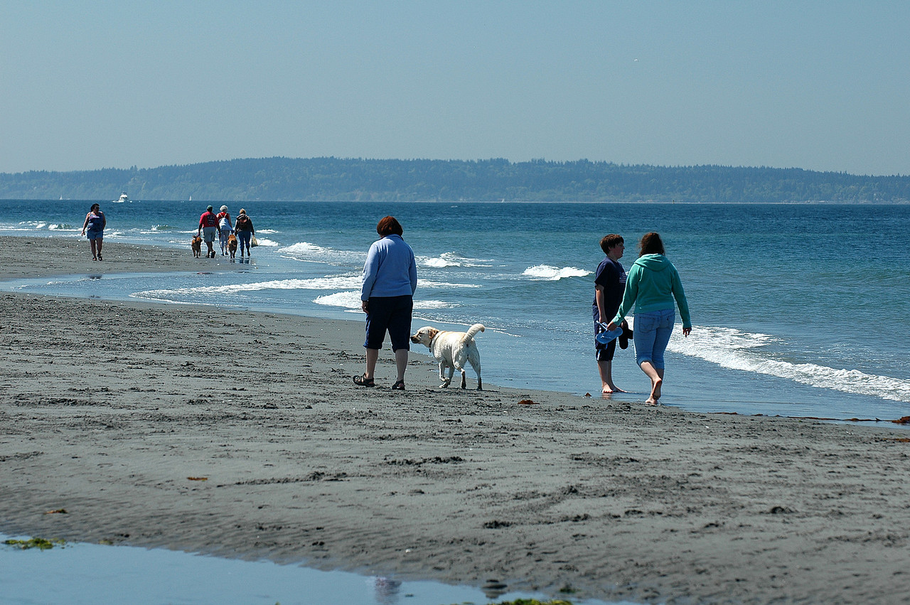 Beach combing at Edmonds beach dog park