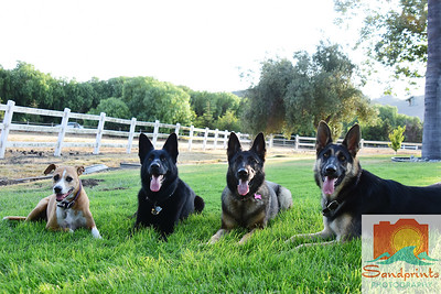 Ruggerone dogs 266