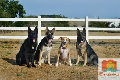 Ruggerone dogs 018