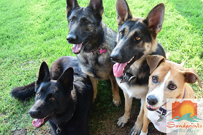 Ruggerone dogs 089