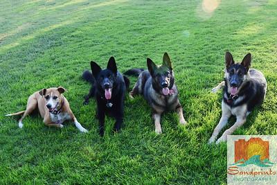 Ruggerone dogs 289