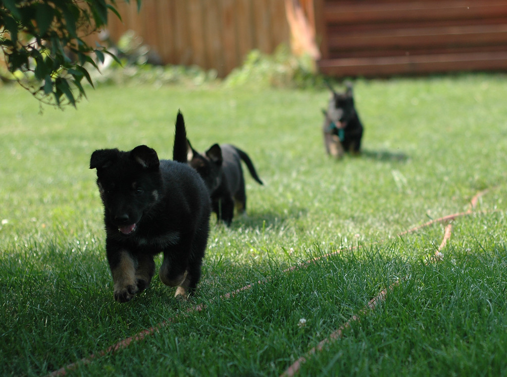 even more photos of cute puppies running ;)