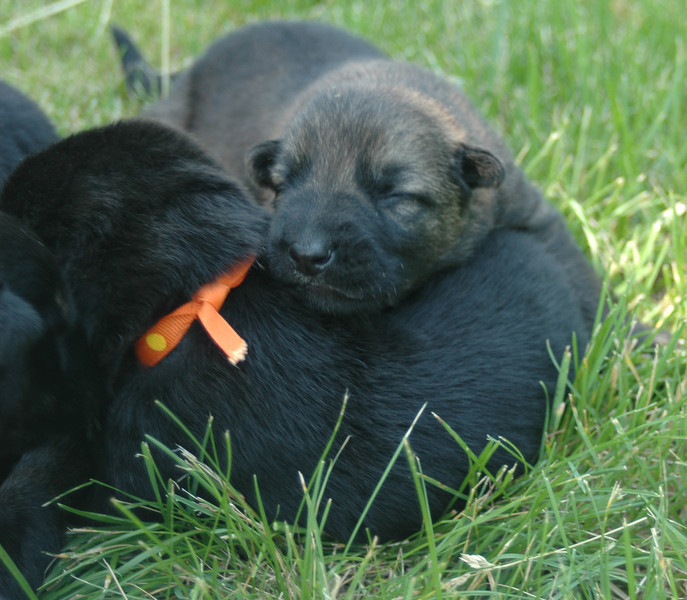 Sable boy uses orange collar girl as a pillow :)