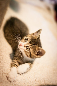Kittens-May2013-0334