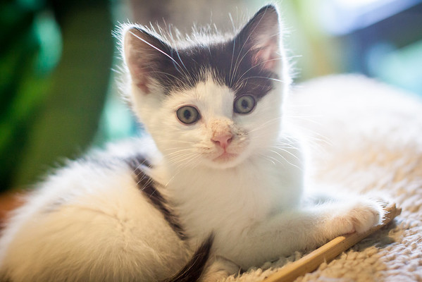 Kittens-May2013-0360
