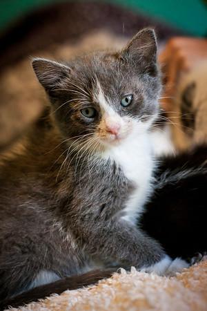 Kittens-May2013-0317