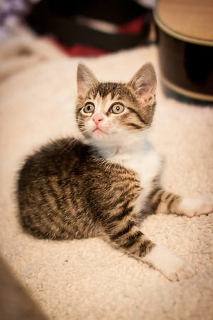 Kittens-May2013-0330