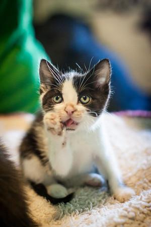 Kittens-May2013-0342