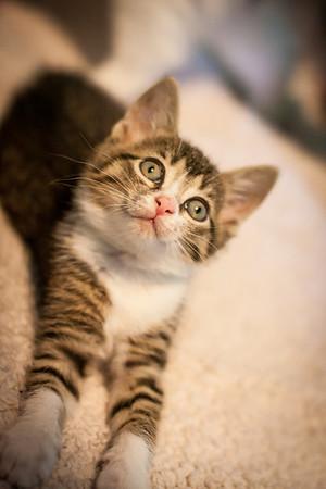 Kittens-May2013-0333
