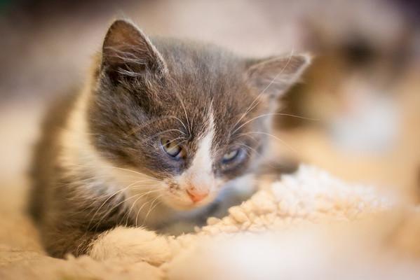 Kittens-May2013-0308