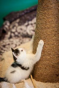 Kittens-May2013-0345