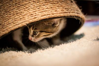 Kittens-May2013-0355