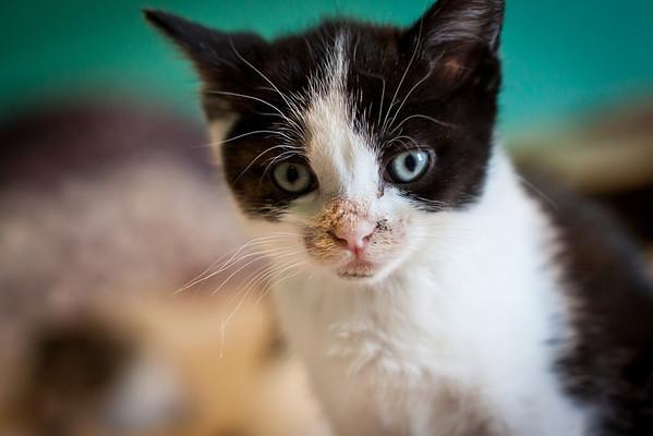 Kittens-May2013-0310