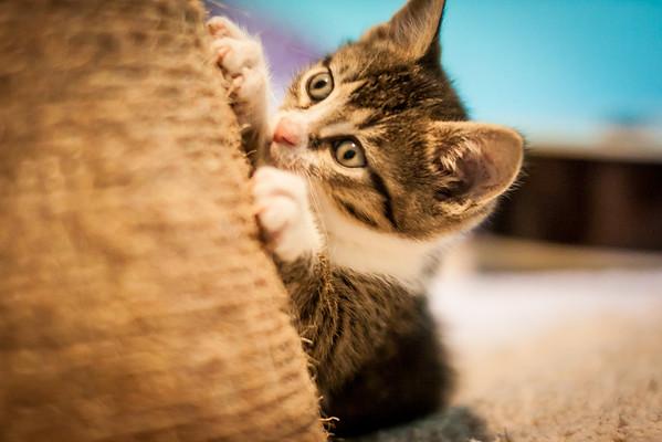 Kittens-May2013-0349