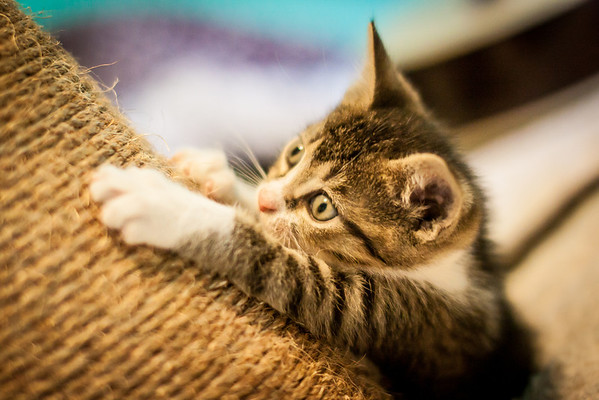 Kittens-May2013-0350