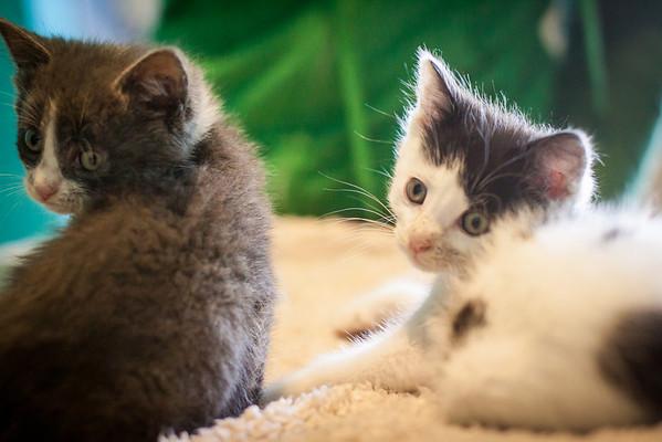 Kittens-May2013-0364