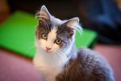 Kittens-May2013-0312