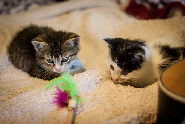 Kittens-May2013-0320