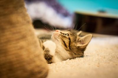 Kittens-May2013-0348