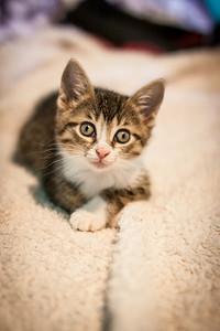 Kittens-May2013-0369
