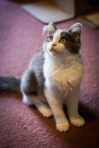 Kittens-May2013-0363