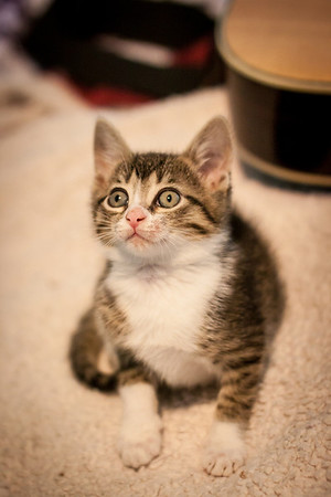 Kittens-May2013-0324