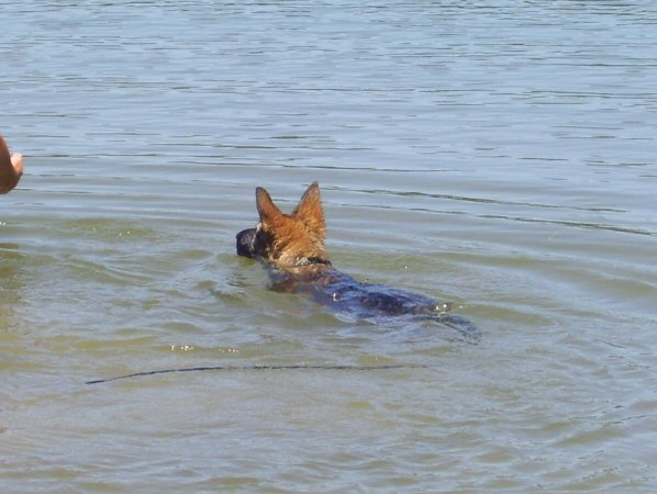 Iso's first swimming lesson