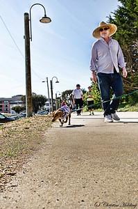 SPCA Wag and Walk 2013 Cannery Row, Monterey, CA