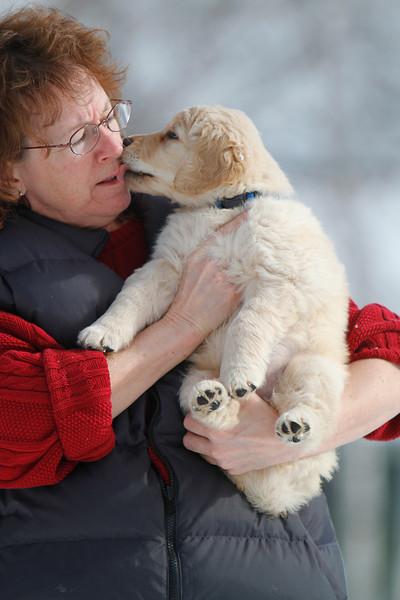 Sam the puppy 8
