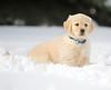 Sam the puppy 24