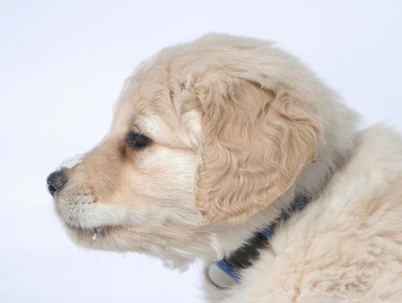 Sam the puppy 27