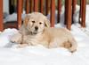Sam the puppy 15