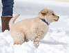 Sam the puppy 34