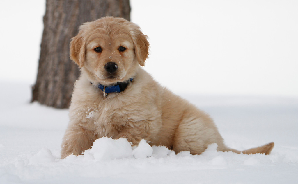 Sam the puppy 22